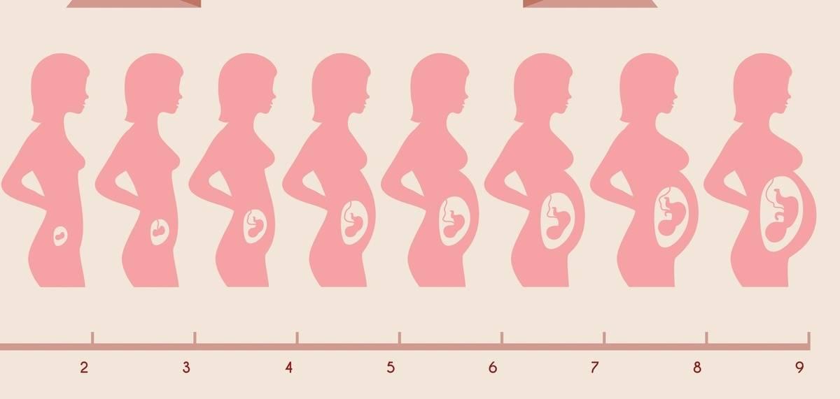 На какой неделе беременности начинает шевелиться ребенок - признаки, ощущения