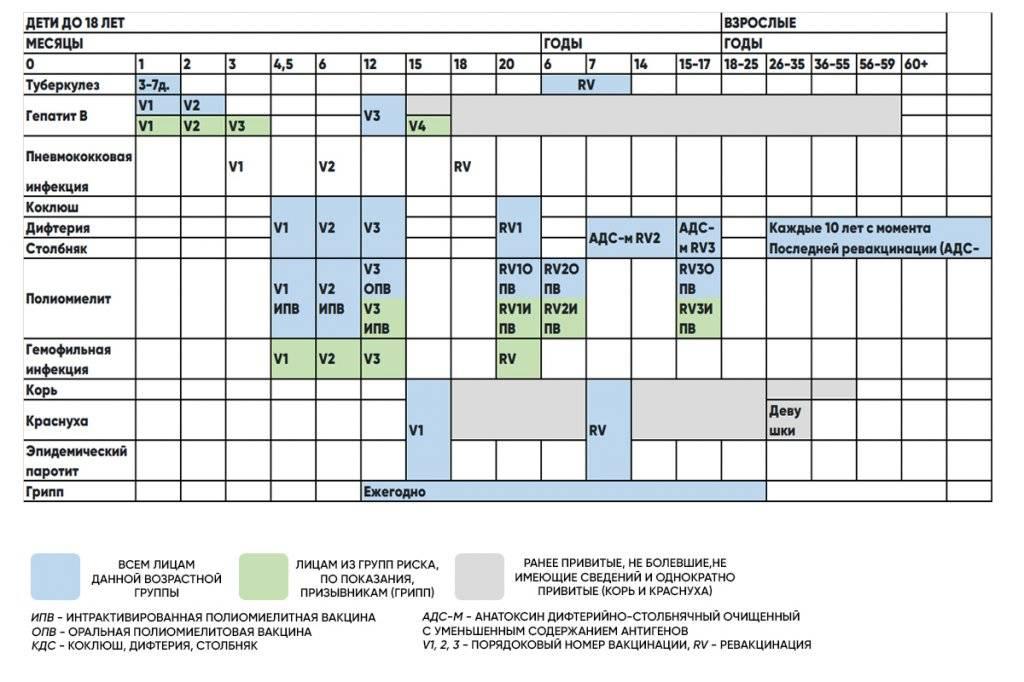 Календарь прививок 2021 для детей и взрослых (таблица)