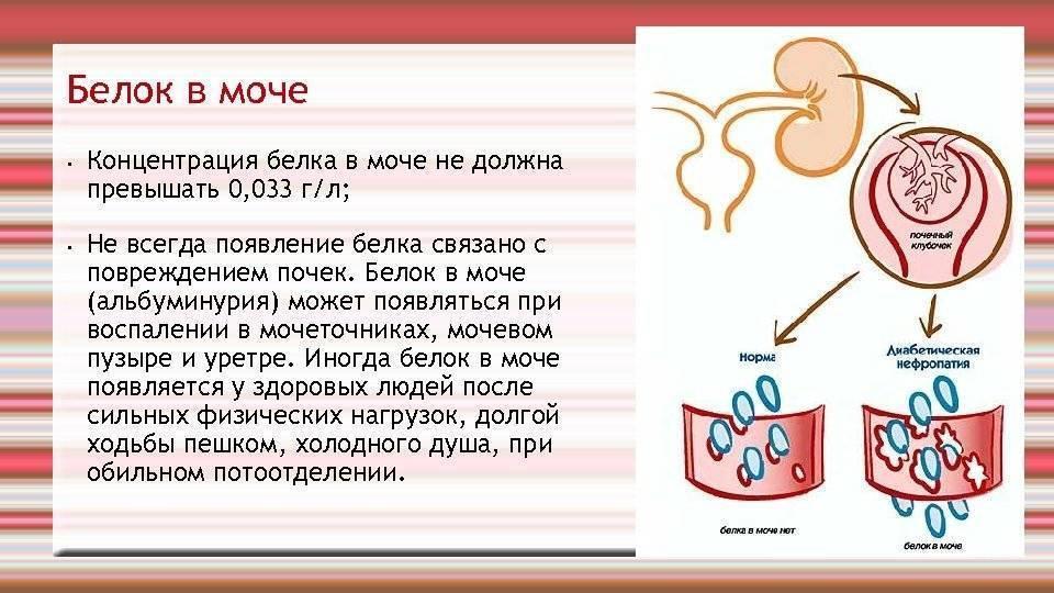 Инфекции мочевыводящих путей (имвп) у детей. информация для родителей.