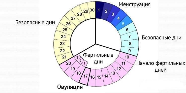Менструальный цикл – что это такое, основные симптомы и фазы периода менструации | нормы дней месячных, интенсивность кровотечений | o.b.®