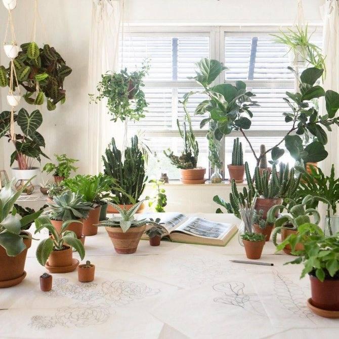 Какие растения лучше подходят для детской комнаты?