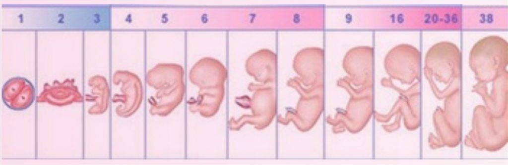 На какой неделе беременности начинает шевелиться ребенок