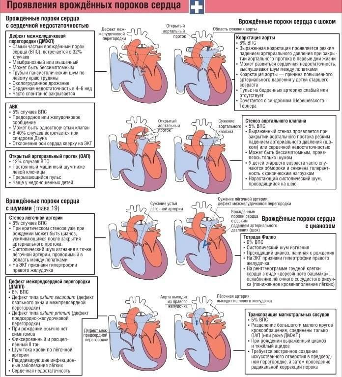 Детское сердце. шумы в сердце у ребенка причины