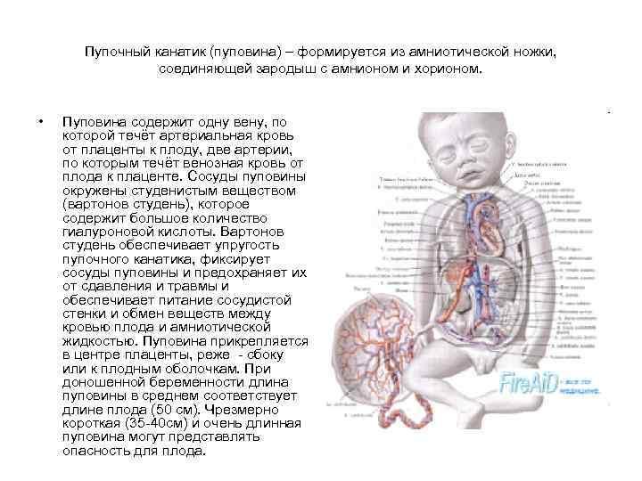 Допплерометрия плода — все об узи беременных с доплером