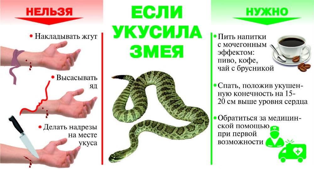 Если ребёнка укусила змея - что делать?