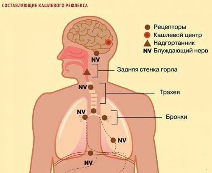 Крапивница. причины, симптомы и признаки, первая помощь, лечение, диета при патологии :: polismed.com