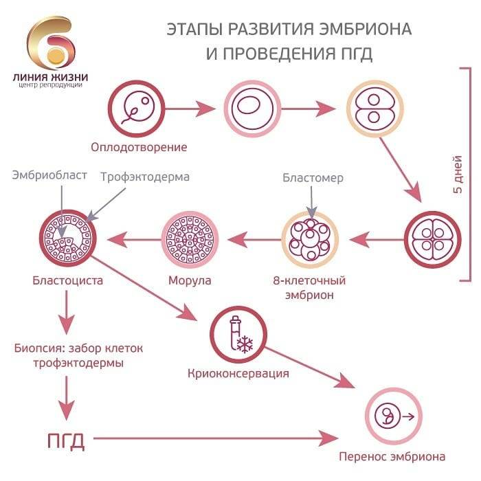 Пгд эмбрионов, преимплантационная генетическая диагностика эмбрионов