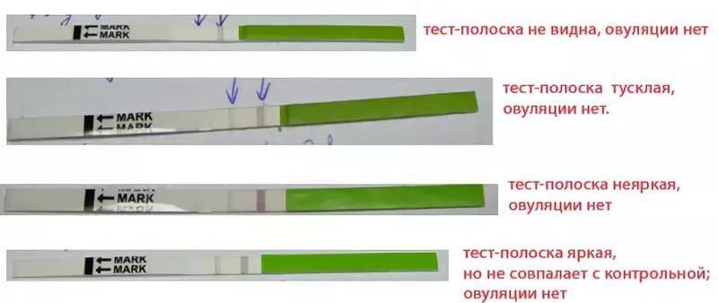 Мониторинг фолликулогенеза - овуляция под контролем