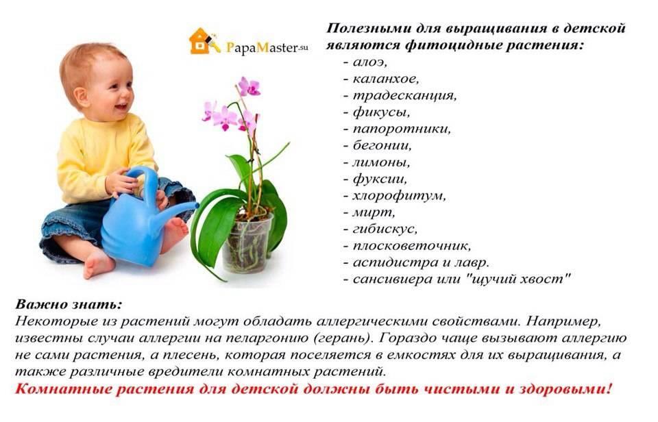 12 лучших комнатных растений безопасных для детской комнаты: название с картинками и описание цветов