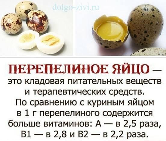 Перепелиные яйца польза и вред для детей: как давать, сколько можно есть