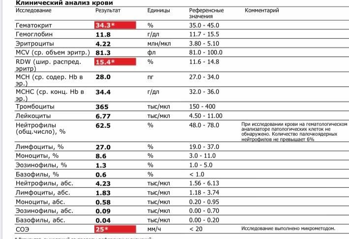 Что нужно знать о высоком уровне лейкоцитов в крови