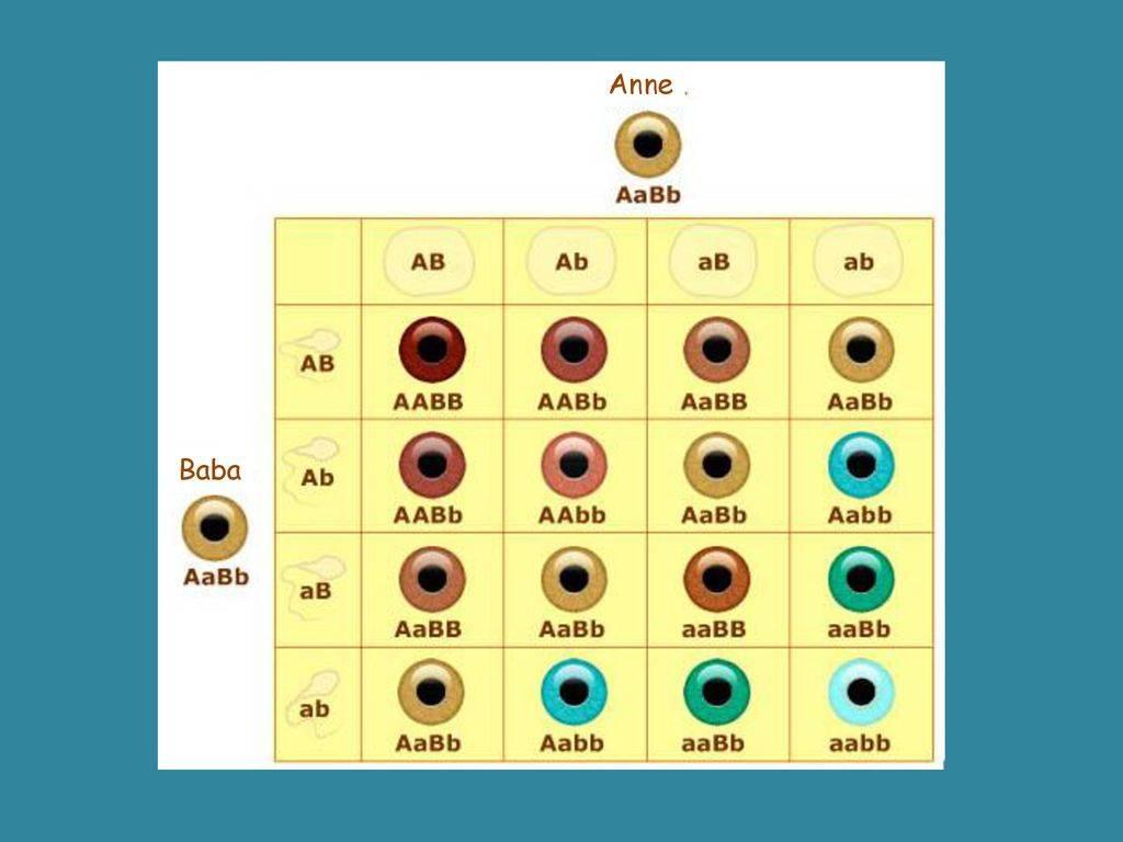 Какие глаза будут у ребенка — таблица вероятностей - личныйврач