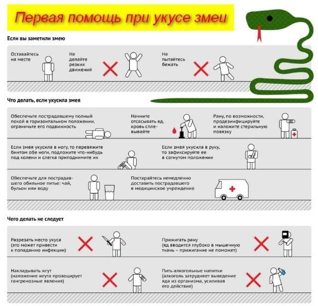 Симптомы укуса гадюки: как выглядит и отличить от других укусов?   компетентно о здоровье на ilive