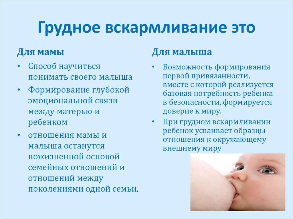 Грудное кормление новорожденных сразу после родов:  практические советы и инструкции