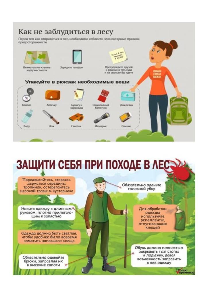 Правила поведения в лесу для детей: рекомендации «лизы алерт»