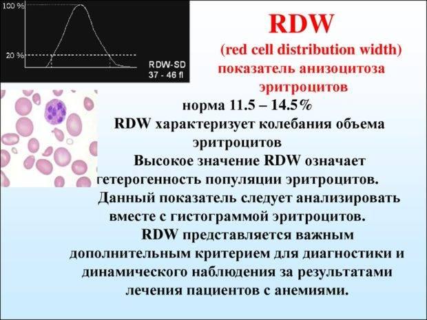 Ширина распределения эритроцитов (индекс rdw): что это, норма, повышен и понижен