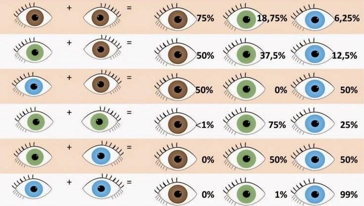 Формирование бинокулярного зрения у детей