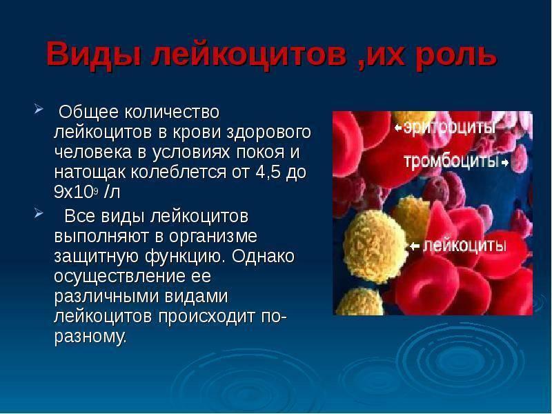 Лейкоцитурия – лейкоциты в моче