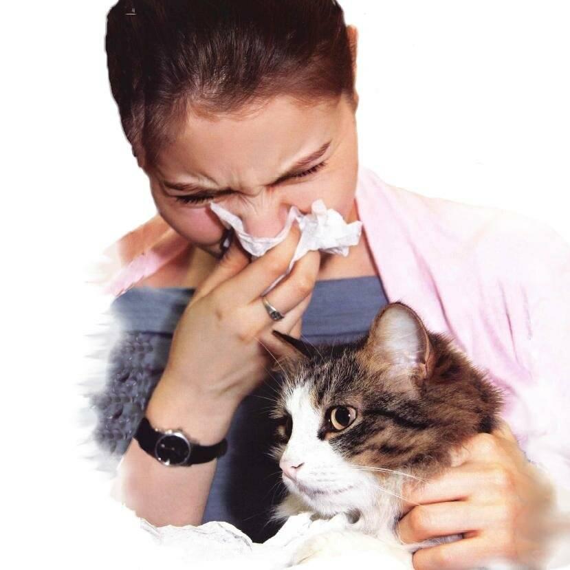 Анализы определяющие аллергию