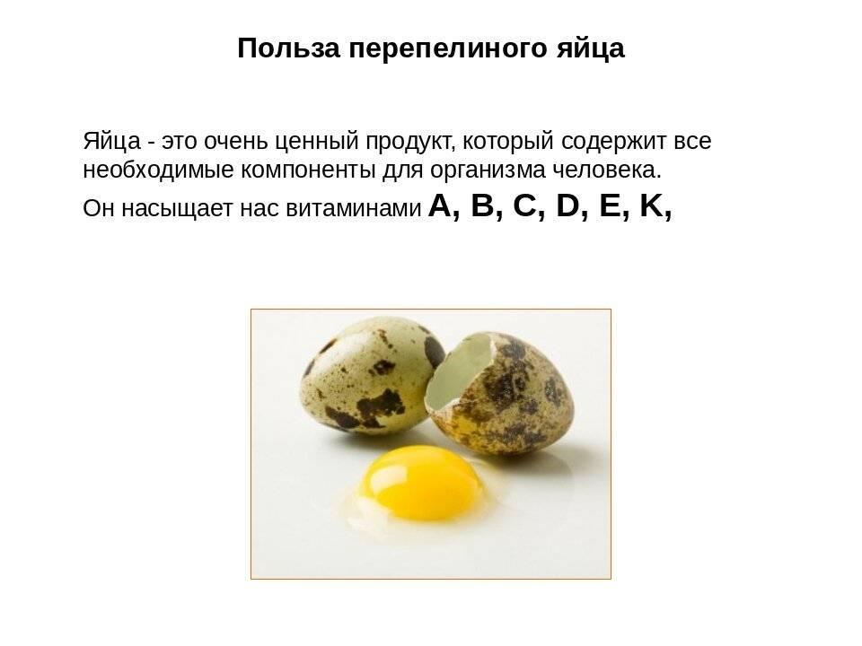 Как приготовить перепелиные яйца и что можно сделать: рецепты