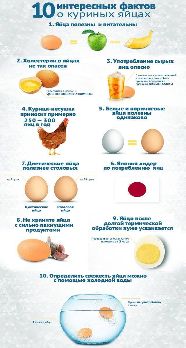 Egg guru — первый про яйца. возраст, с которого разрешается давать детям куриные яйца