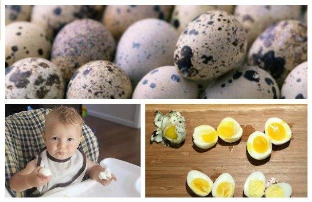 Как варить перепелиные яйца правильно - сколько минут всмятку или вкрутую после закипания воды