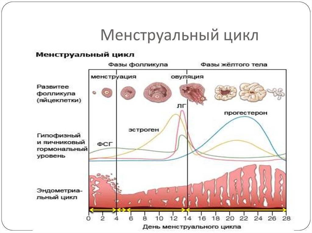 Месячные (менструация)