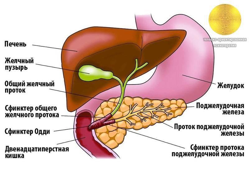 Холецистит первичное заболевание билиарной системы