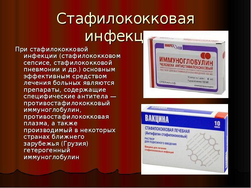 Стафилококковая инфекция у животных | beleka.by | beleka.by