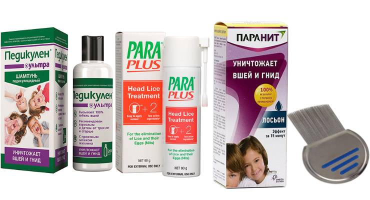 Педикулёз (вшивость) - симптомы болезни, профилактика и лечение педикулёза (вшивости), причины заболевания и его диагностика на eurolab