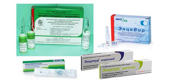 Прививка от клеща: всё, что нужно знать :: здоровье :: рбк стиль