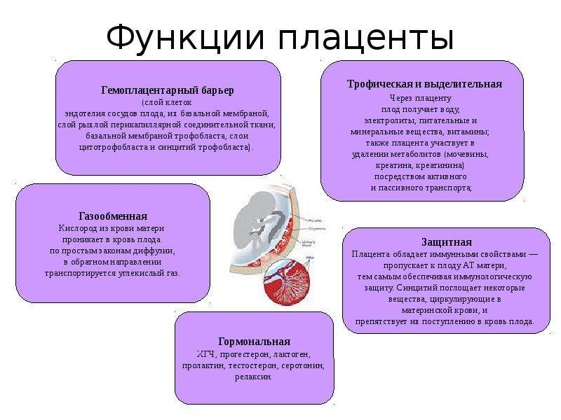 Патология плаценты при хромосомных аномалиях у плода