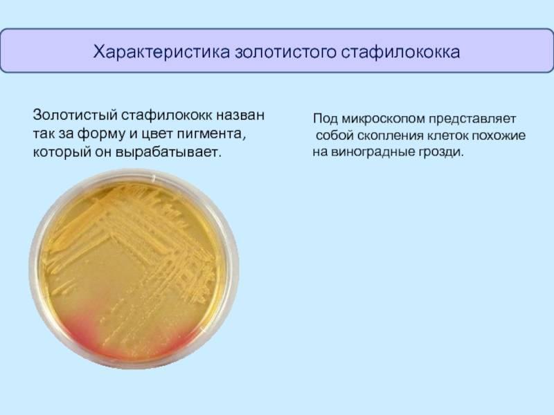 6 проявлений, по которым можно опознать золотистый стафилококк у грудничка