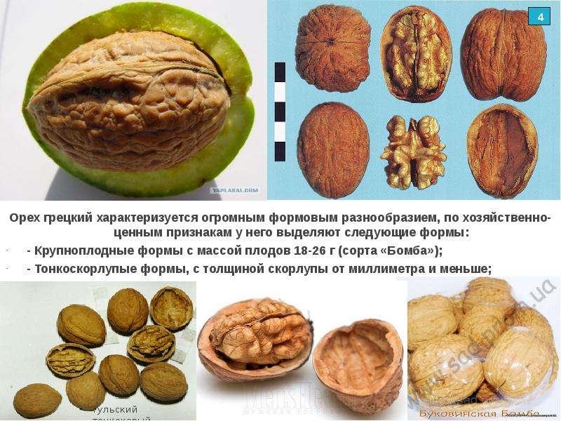 Орехи кешью польза и вред для организма, профилактика рака и хронических заболеваний