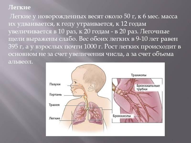 Трахеит у взрослых: симптомы, лечение, профилактика | компетентно о здоровье на ilive