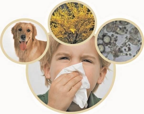 Аллергия на кошек - симптомы и лечение у детей и взрослых