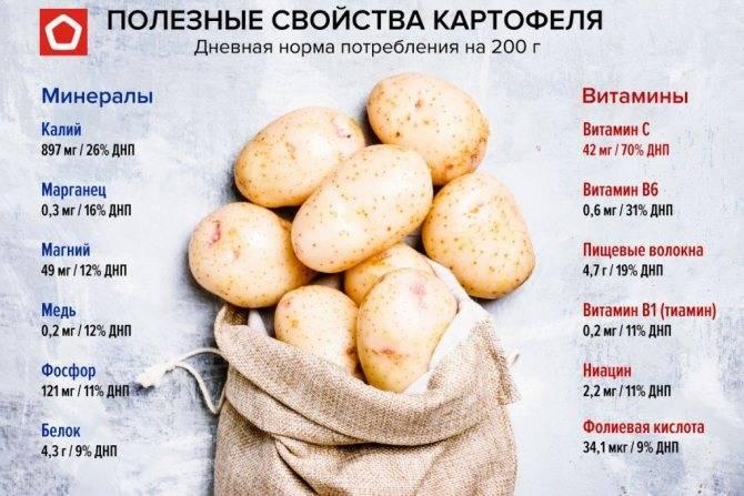 Можно ли картошку кормящим: в чем ее польза и вред. можно ли картошку кормящим и в каком виде её употреблять, не навредив малышу - автор екатерина данилова - журнал женское мнение