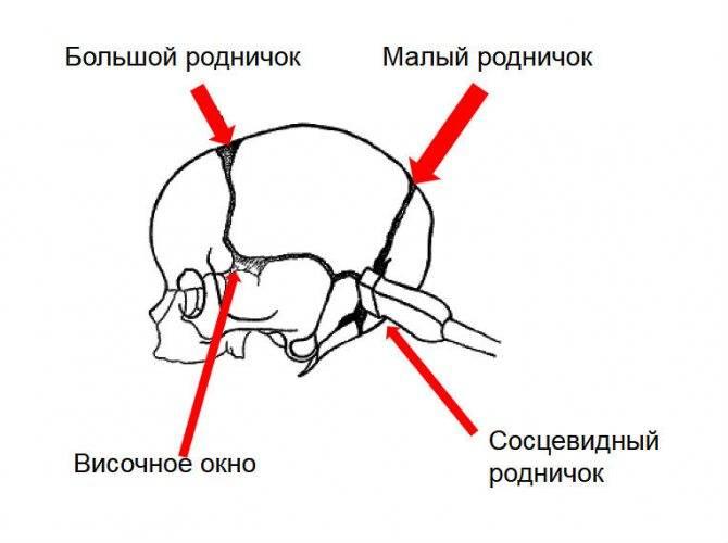 Узи головного мозга ребенку в москве | семейный доктор