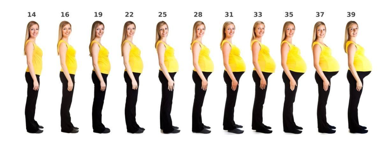 Сантиметры жизни: как изменяется живот беременной женщины