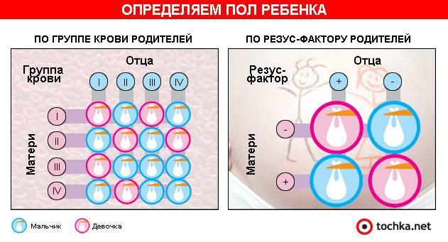 Как узнать группу крови ребенка по родителям