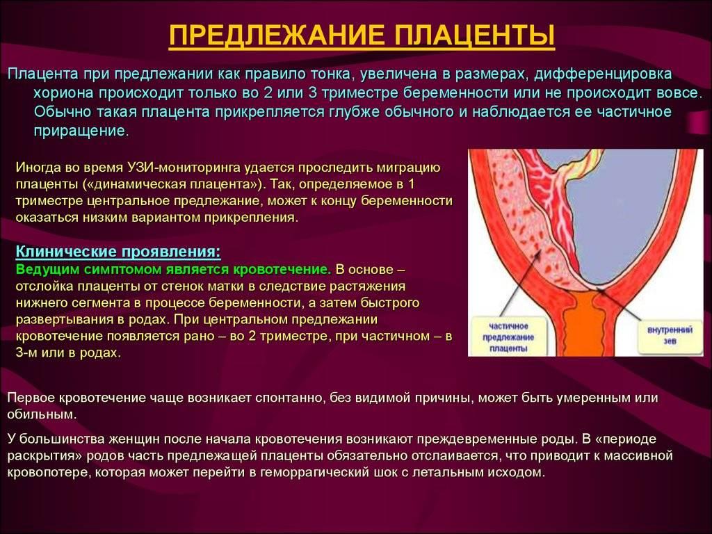 Краевое предлежание плаценты |  эко-блог