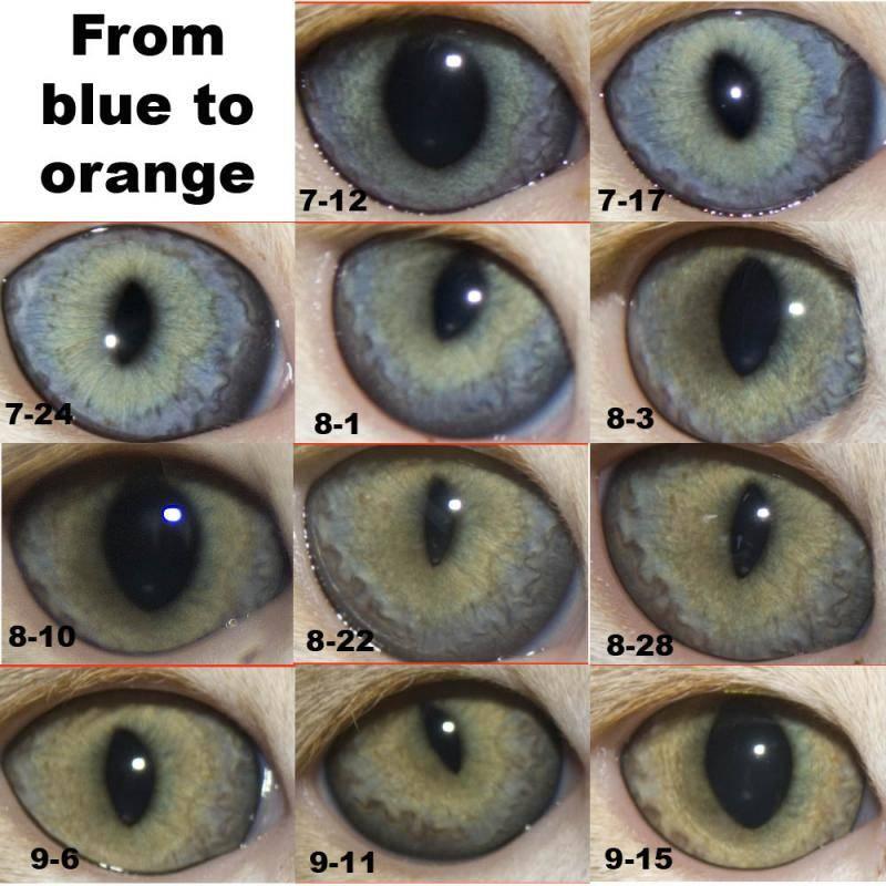 Как изменяется цвет глаз новорождённого ребёнка