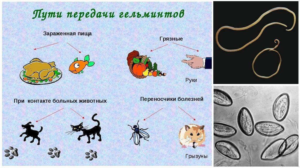Глисты у детей: симптомы и лечение гельминтоза - как понять, есть ли паразиты в организме?