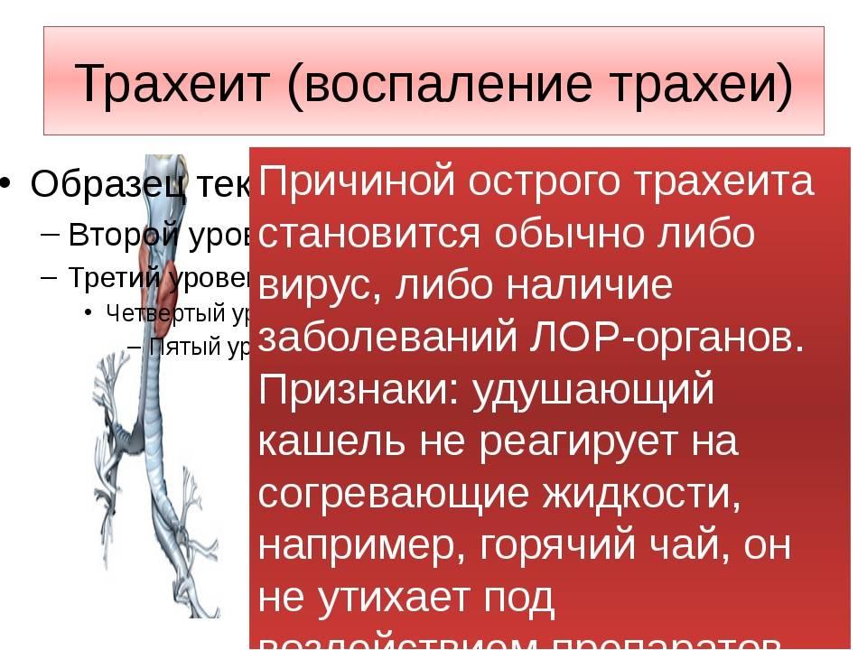 Острый трахеит: симптомы и лечение острого трахеита у взрослых | доктор мом®