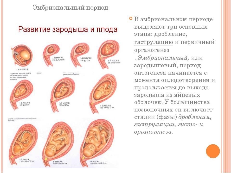 1 неделя беременности: признаки и симптомы, ощущения, что происходит в организме женщины