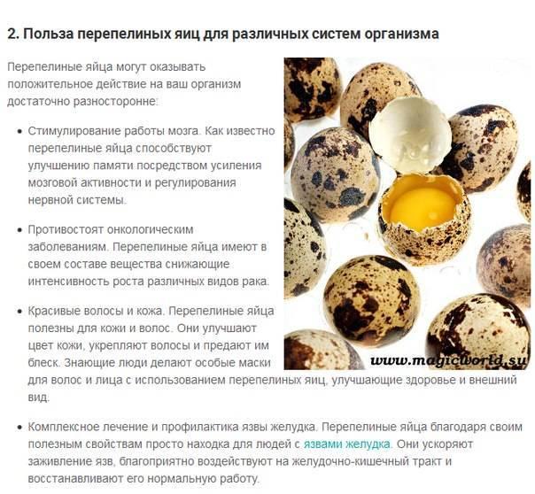 Сколько варить перепелиные яйца: как варить вкрутую после закипания