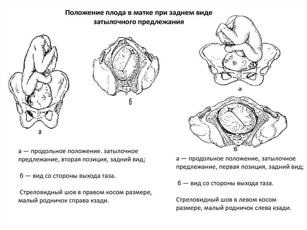 До какой недели беременности малыш может переворачиваться и когда малыш должен перевернуться перед родами stomatvrn.ru
