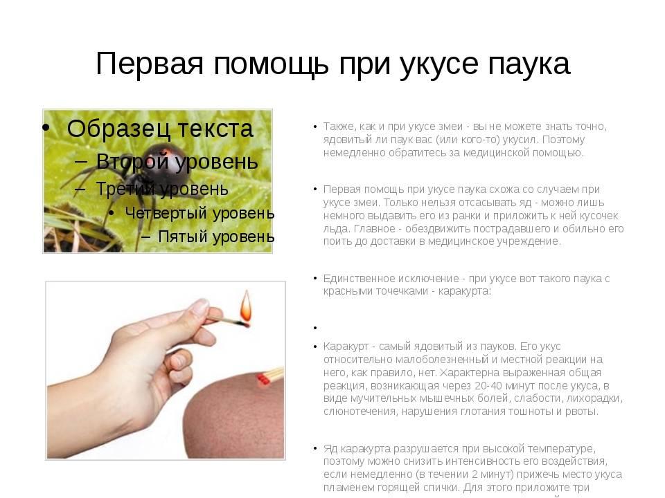 Что делать, если ребенка до крови укусил хомяк: какие медицинские препараты и народные средства могут помочь?