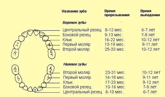 Кариес молочных зубов: причины, симптомы, лечение - энциклопедия ochkov.net