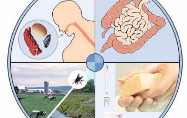 Гастроэнтерит. симптомы, причины и лечение гастроэнтерита